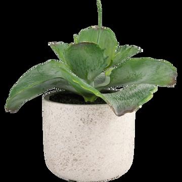 Plante artificielle H17cm-SUCCULENTE