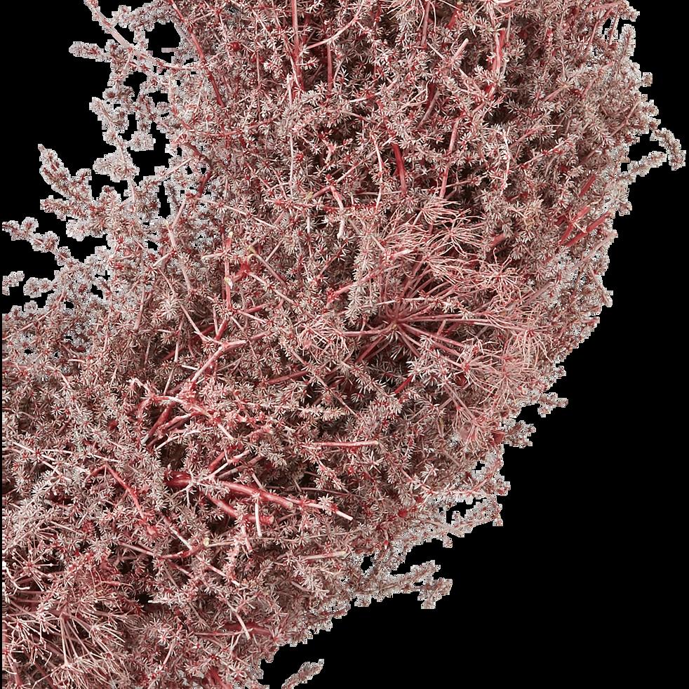 Couronne d'asperge rose D60cm-SIAM