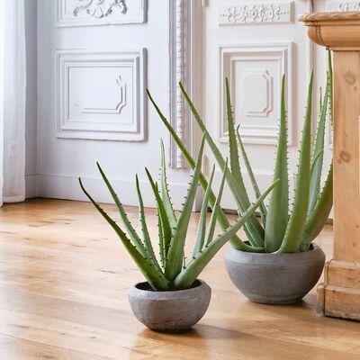 Plante artificielle aloe en pot - vert H9,5cm-Aloe