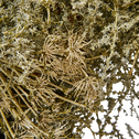 Couronne d'asperge vert D60cm-ANNAM