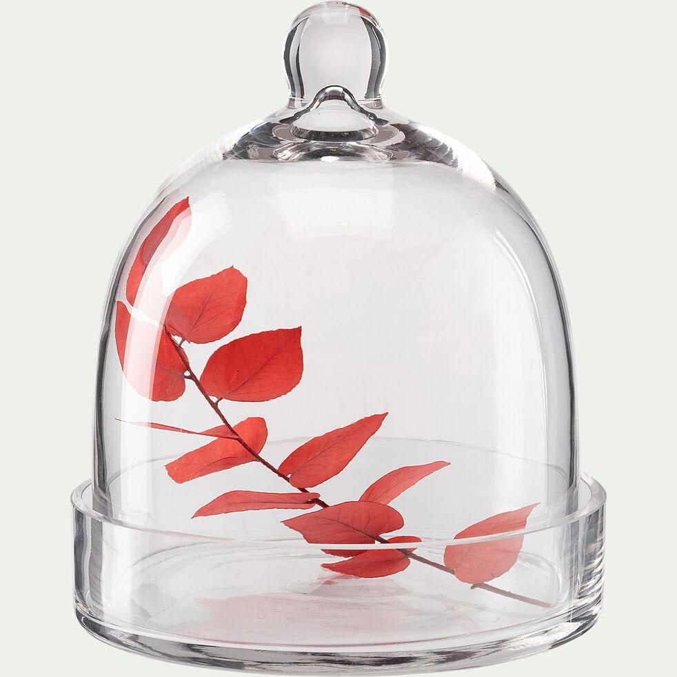 Cloche et socle en verre - transparent D16,5xH19cm-PROSTANTHERA