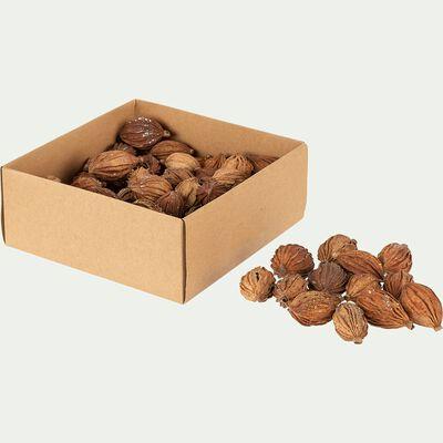 Boite de 20 fruits secs déco -  D10xP4,5cm naturel-SIRICE