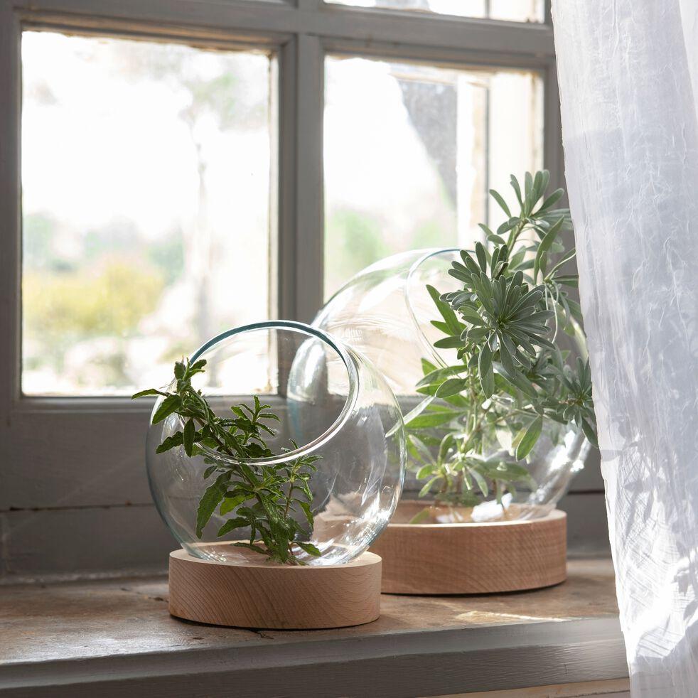 Terrarium en verre et socle en bois - transparent H20,5cm-MANHATTAN