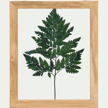 Plante encadrée fougère 28x34cm-NATURE