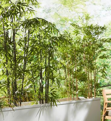 Plante artificielle hauteur 180cm-Bambou