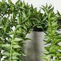 Plante tombante artificielle - vert H94cm-PLANTE GRASSE