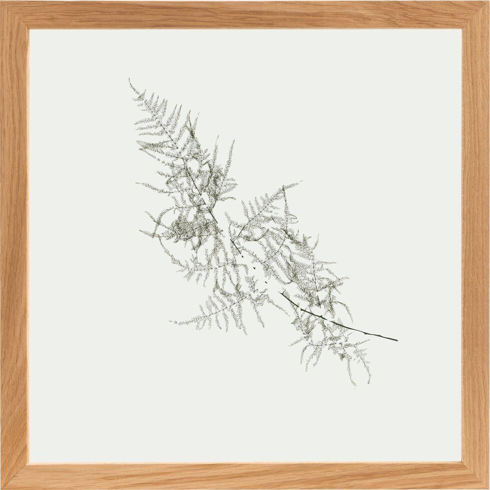 Plante encadrée aspergus 44x44 cm-NATURE