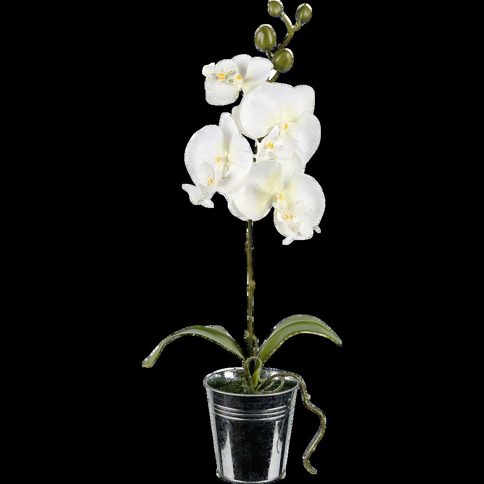 Orchidée en pot H48cm-Orchidée