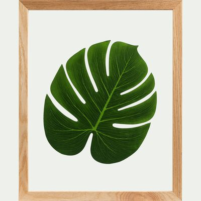 Plante encadrée monstera 44x54cm-NATURE