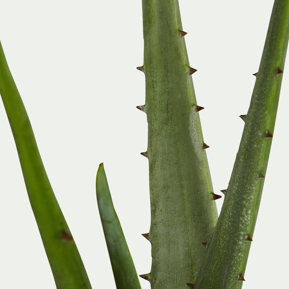 Plante artificielle aloe en pot - vert H11cm-Aloe