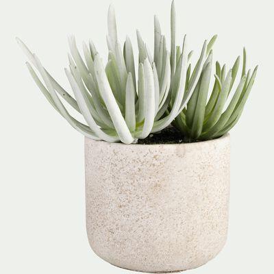 Succulente artificielle en pot - vert et blanc H20cm-SUCCULENTE