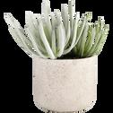 Plante artificielle verte H20cm-SUCCULENTE