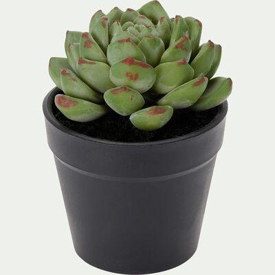 Plante grasse artificielle en pot - vert et blanc H10cm-ALOE