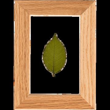 Plante encadrée feuille de rosier 14x19cm-NATURE