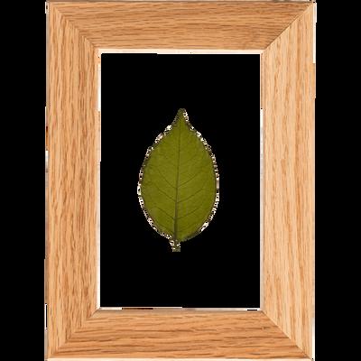 Image encadrée feuille de rosier 14x19cm-NATURE