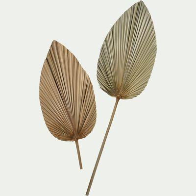 Feuille de palmier séchée décorative - naturel H65cm-PASSI