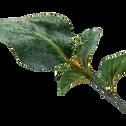 Branche artificielle blanchi H80cm-EUCALYPTUS