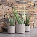 Plante artificielle aloe - vert H6cm-Aloe