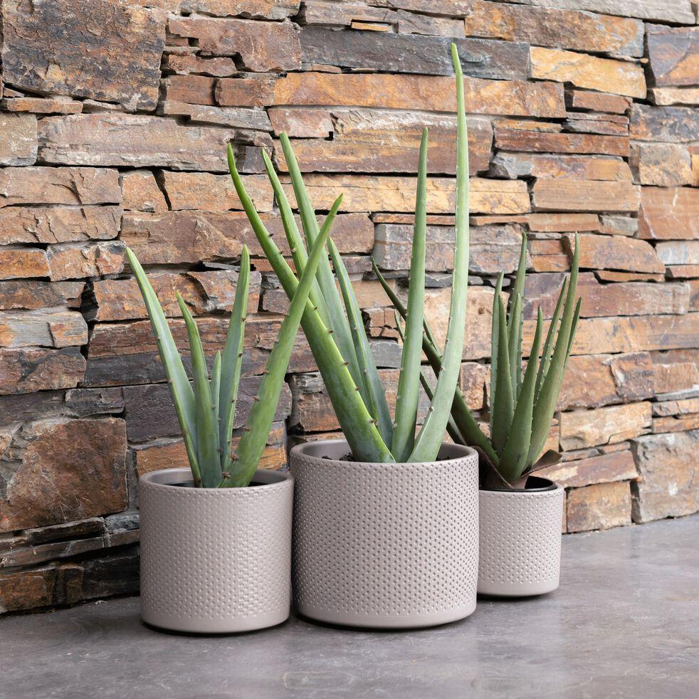 Plante artificielle H6,25cm-Aloe