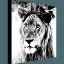 tableau decoplex noir et blanc 70x70cm lion tableaux et affiches alinea. Black Bedroom Furniture Sets. Home Design Ideas