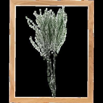Image encadrée treefern 44x54cm-NATURE