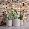 Plante artificielle aloe en pot - vert H35cm-ALOE