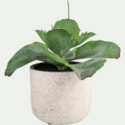Succulente artificielle en pot - vert H17cm-SUCCULENTE